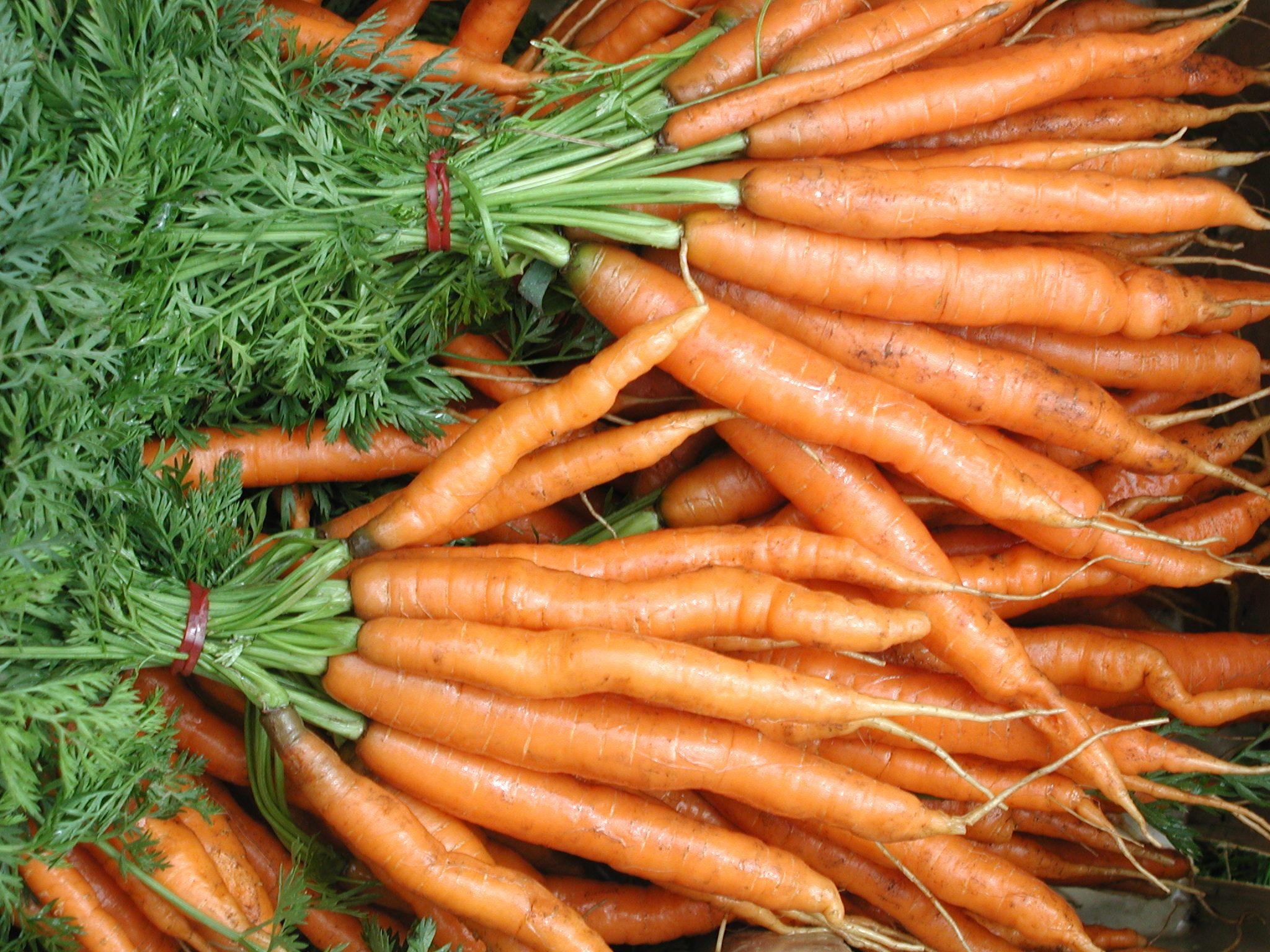 Работа в Швеция / Позиция: Служители във ферма за моркови